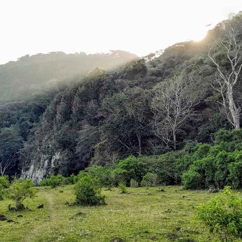 a rainforest in africa